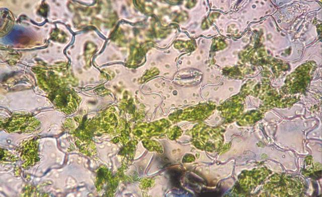 Why do plants need potasium?
